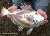 John Dory - Stainless Steel and Moulded Glass Eye